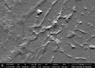 Magnified view of micro-cracking of coating with filiform tunnels