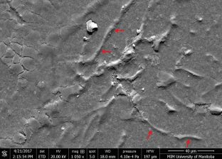 Magnified view of Corrosion Site . Micro-cracking of the coating along with filiform tunnels (denoted by arrow).